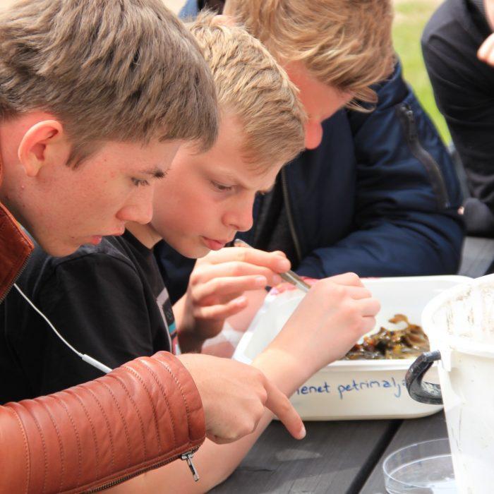 Petrimaljan tutkimista Itämeri-kesälukiossa